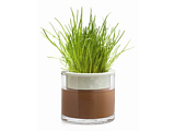 Wet Pot With Chives
