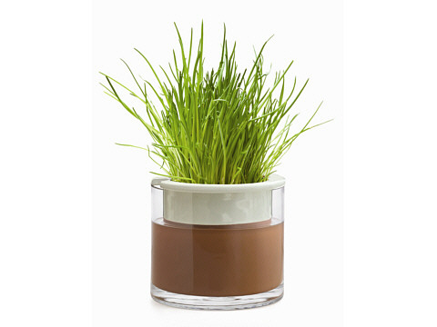 Herb-Size Wet-Pot With Chives